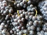 (11) Gimpo Grapes