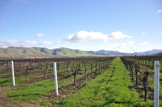 RiverBench Vineyards - Los Olivos, California