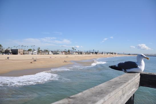 Seagull and Seal Beach - Seal Beach, California