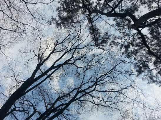 Trees and sky above