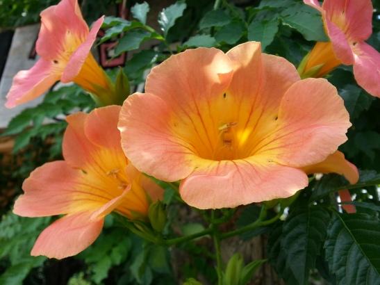Seogwipo Flowers
