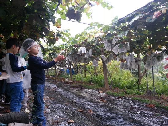 Catching rain and picking grapes