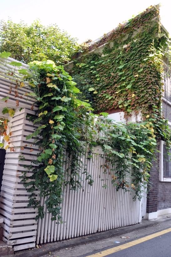 (1) Vines on House