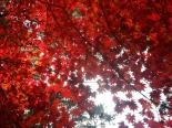 Autumn's leaves
