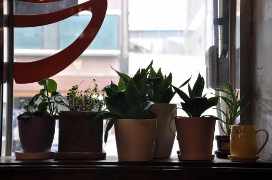 (1.1) Plants