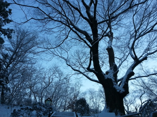 Snow covered trees and Blue Sky - Wolgot, South Korea