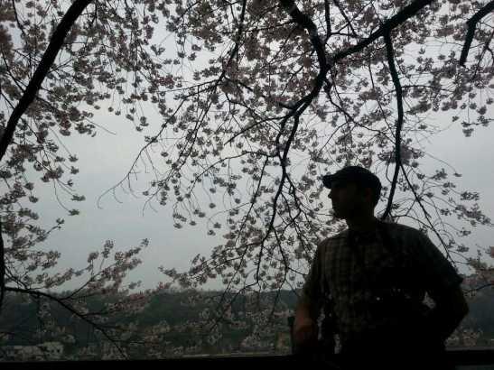 (12) Cherry Blossom Silhouette