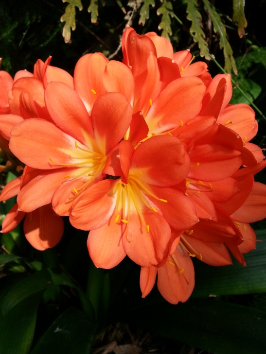 (12) Orange Flowers