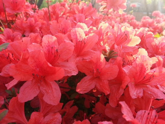 (9) Spring flowers